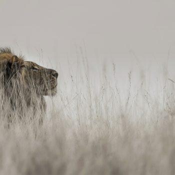 wildlife00248