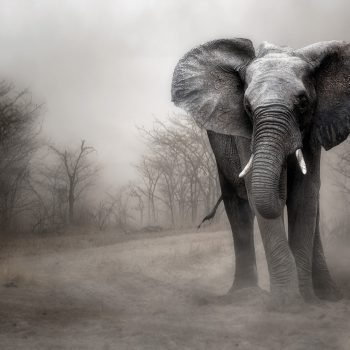 wildlife00272