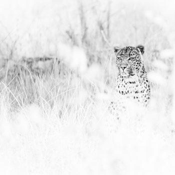 wildlife00296