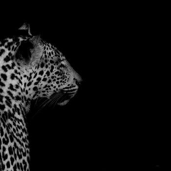 wildlife00297